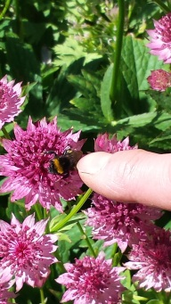 bee tickling