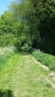 Hoveringham walk